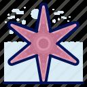 animals, aquatic, nautical, ocean, starfish, wildlife icon