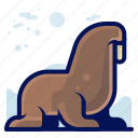 animals, aquatic, nautical, ocean, walrus, wildlife icon