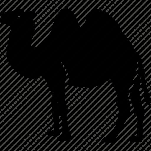 animal, camel, desert, egypt icon