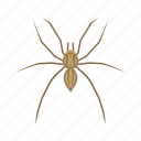 animal, arachnid, arthropod, grass spider, invertebrate, spider icon