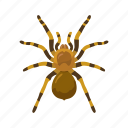 animal, animals, arachnid, bird-eating spider, spider, tarantula icon