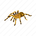 animal, arachnid, invertebrate, red-kneed tarantula, spider, tarantula icon