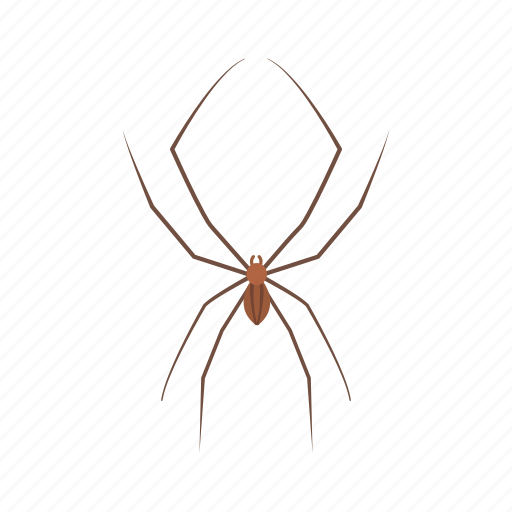 animal, arachnid, carpenter spider, cellar spider, daddy long legs, invertebrates icon