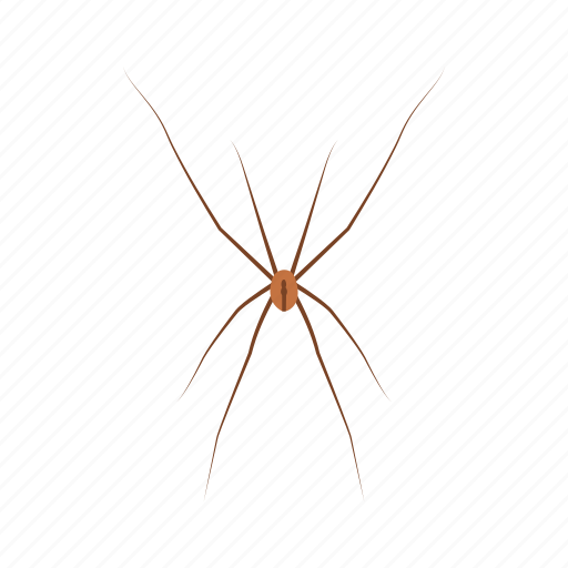 animal, arachnid, cellar spider, daddy long legs, invertebrates, spider icon