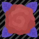 element, fortune, mystical, rose icon
