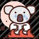 animal, cry, koala, zoo