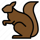 animal, rodent, sciurus, squirrel icon