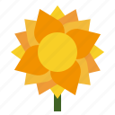 flora, sunflower, nature, spring, flower, floral