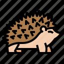 nature, mammal, wildlife, hedgehog, animal icon