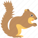 animal, cartoon squirrel, chipmunk, domestic animal, squirrel icon