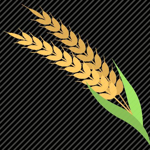 ear of barley, grain, oat, wheat, wheat ear icon