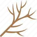 dead tree, dry plant, dry tree branch, dry twig, tree branch