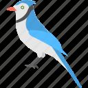 bird, bluejay gazes, eastern bluebird, morning bird, songbird