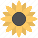 common sunflower, flower, helianthus, sunflower, yellow flower icon