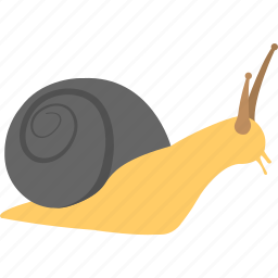 animal, gastropod, insect, mollusk, snail icon