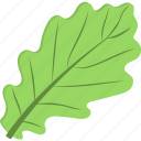 green leaf, green vegetable, leafy vegetable, spinach, spinach leaf icon