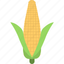 corn cob, maize, ripe corn, sweet corn, yellow corn icon