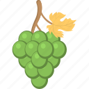 bunch of grapes, fruit, grapes, grapes with leaf, green grapes icon