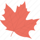 autumn leaf, fall leaf, leaf, maple, maple leaf icon