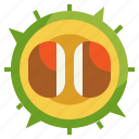 autumn, botanical, chestnut, fruit, leaf icon
