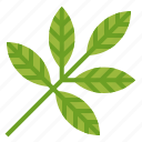 botanical, herbs, leaf, plant, spa icon