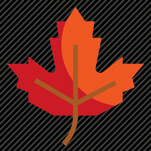 autumn, botanical, maple, nature, yellow icon