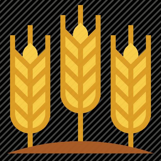 barley, cereal, farming, plant, wheat icon