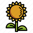 blossom, botanical, flower, nature, sunflower icon