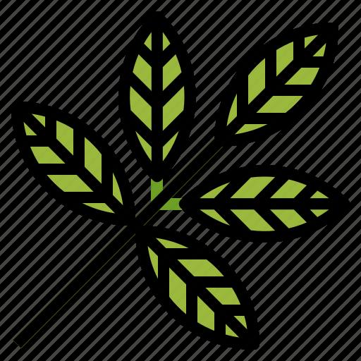 botanical, herbs, leaf, plant, spa icon