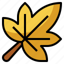 autumn, botanical, leaf, maple, nature, yellow icon
