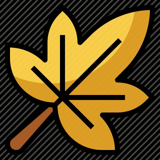 autumn, botanical, leaf, maple, nature, yellow icon