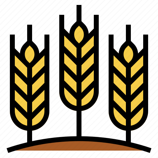 barley, cereal, farming, plant, wheat icon