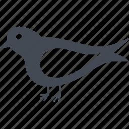 autumn, bird, feathers, plumage, wings icon