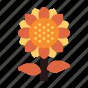 autumn, fall, plant, sunflower icon