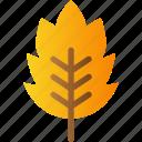 autumn, fall, leaf, nature, season