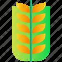 agriculture, farming, food, grain, wheat