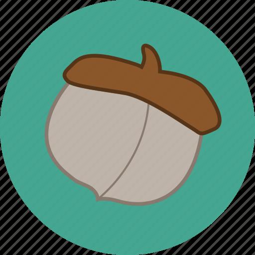 acorn, autumn, fall, nut icon