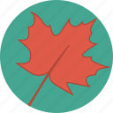 autumn, canada, canadian, fall, leaf, maple, maple leaf icon