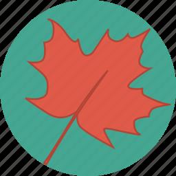 autumn, canada, canadian, fall, leaf, maple, maple leaf icon
