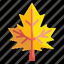 autumn, botanical, leaf, maple icon