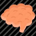 brain, mind, head, thinking, intelligence, think