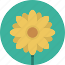 floral, flower, nature, plant