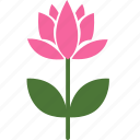 floral, flower, garden, lotus, nature, plant, spring icon