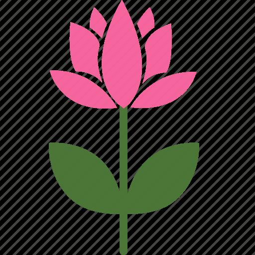 floral, flower, garden, lotus, nature, plant, spring icon