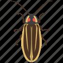 beetle, bug, firefly, insect