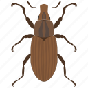 beetle, bug, insect, weevil