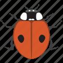 beetle, bug, insect, ladybug icon