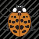 ladybug, beetle, ladybird, bug, insect