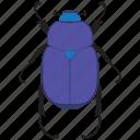beetle, bug, insect, scarab