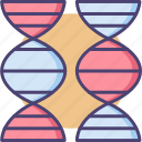 bioengineering, chromosome, comparation, dna, genes, genetic, genetic comparation icon